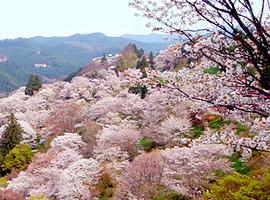 4月の山 吉野山(奈良県)